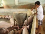 Thị trường - Tiêu dùng - 'Thủ phủ' nuôi heo cả nước bên bờ vực phá sản