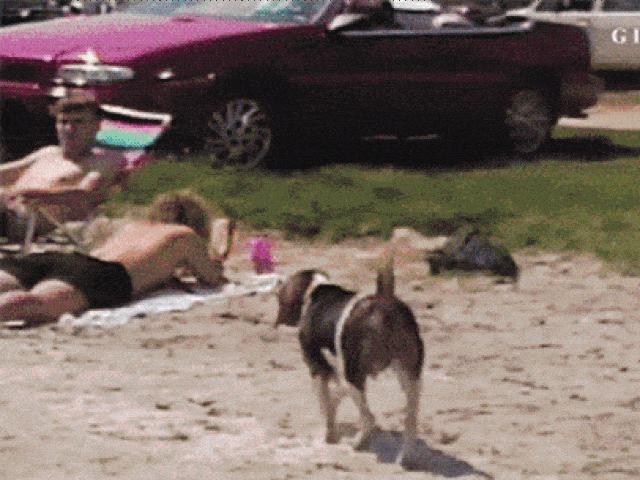 """Ảnh động: Những chú chó dám """"láo toét"""" với cả chủ"""