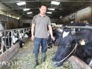 Thị trường - Tiêu dùng - Trai Kinh Bắc nuôi 20 bò sữa vừa làm vừa chơi lãi 2 triệu đồng/ngày