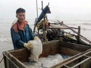 Thị trường - Tiêu dùng - Sứa dày đặc trên biển, ngư dân Nghệ An đi vớt kiếm tiền triệu/ngày