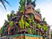 """Tài chính - Bất động sản - Kiến trúc có 1 không 2: 150 cây xanh """"ôm trọn"""" tòa nhà"""