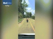 Phi thường - kỳ quặc - Đang bò trên đường, rắn bay lên không trung đớp người đi xe máy