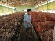 Thị trường - Tiêu dùng - Người nuôi heo mất 30.000 tỉ, khẩn cấp 'giải cứu'