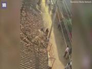 Ấn Độ: Báo sổng chuồng vồ kiểm lâm trên mái nhà