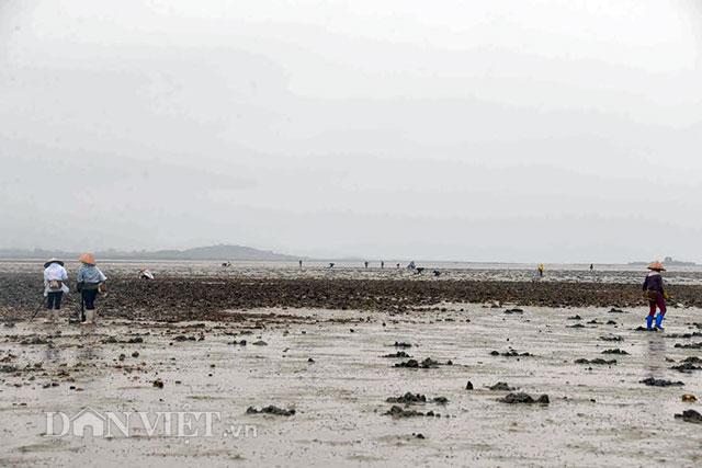 Cận cảnh giun biển nhiều nhung nhúc, dân đào mỏi tay thu tiền triệu - 1