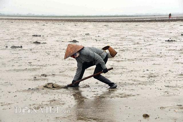 Cận cảnh giun biển nhiều nhung nhúc, dân đào mỏi tay thu tiền triệu - 2