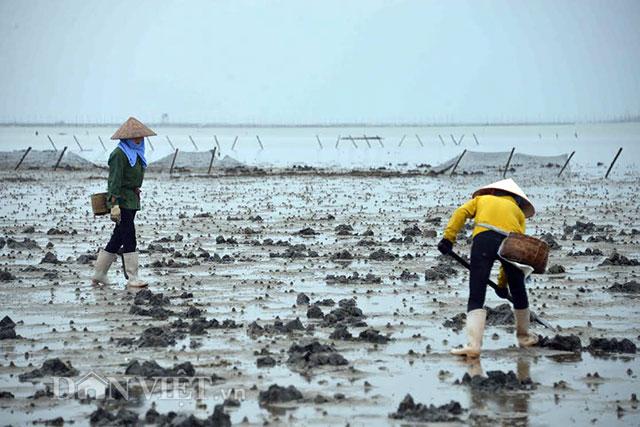 Cận cảnh giun biển nhiều nhung nhúc, dân đào mỏi tay thu tiền triệu - 3