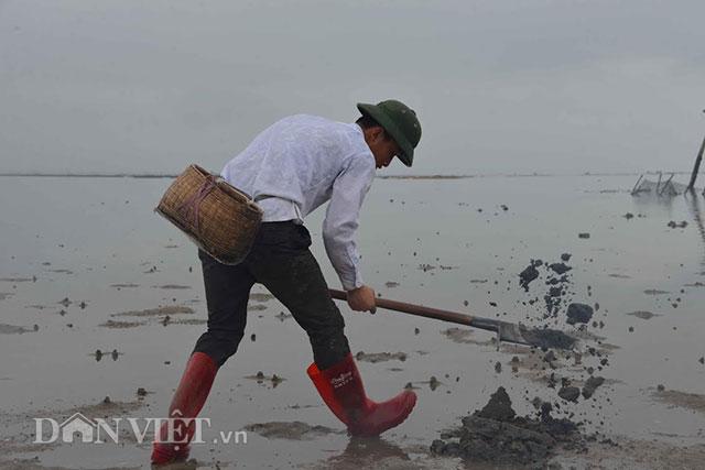 Cận cảnh giun biển nhiều nhung nhúc, dân đào mỏi tay thu tiền triệu - 6