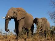 """730.000 con voi ở châu Phi  """" bốc hơi """"  đi đâu?"""
