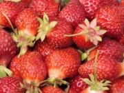 Sức khỏe đời sống - Ăn 15 quả dâu tây mỗi ngày trong 5 tuần ngừa ung thư vú hiệu quả?
