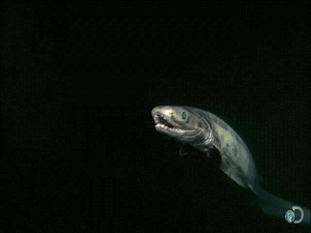 Video thủy quái kinh dị sống dưới đáy đại dương