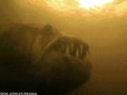 """Thế giới - Loài """"thủy quái"""" khổng lồ dữ tợn hơn """"hung thần Amazon"""""""