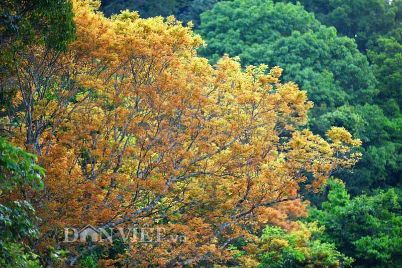 Sơn Trà đẹp miên man thời khắc giao mùa-3