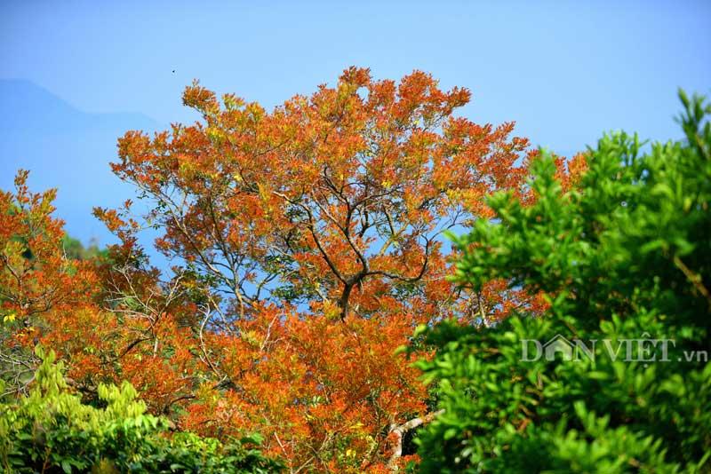 Sơn Trà đẹp miên man thời khắc giao mùa-4