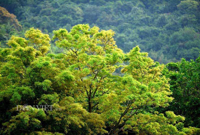 Sơn Trà đẹp miên man thời khắc giao mùa-5
