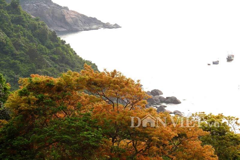 Sơn Trà đẹp miên man thời khắc giao mùa-7