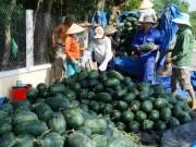 Thị trường - Tiêu dùng - Nông dân xứ Quảng cười với dưa, khóc vì ớt