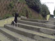"""Bạn trẻ - Cuộc sống - Clip: Những cách leo cầu thang """"siêu lầy"""" của chó cưng"""