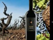 Sự trở lại của một huyền thoại - Rượu vang Pazzia Primitivo