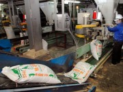 Thị trường - Tiêu dùng - Nuôi lợn lâm nguy, vẫn chi gần 1,2 tỷ USD mua thức ăn chăn nuôi