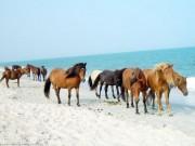 Du lịch - Khám phá những vương quốc dành riêng cho động vật