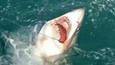 Video: Ngư dân Anh câu cá mập 2 tạ,