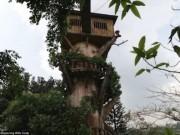 Du lịch - Vẻ đẹp ma mị bên trong công viên bỏ hoang ở Philippines