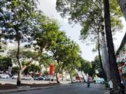 """Tin tức trong ngày - Sắp """"khai tử"""" hàng chục cây cổ thụ ở trung tâm Sài Gòn"""