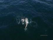 Thế giới - Cá voi mẹ cõng con chạy trốn cá voi sát thủ khát máu