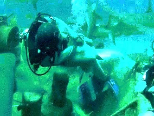 Video: Hãi hùng cảnh thợ lặn bị cá mập cắn vào chỗ hiểm