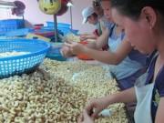 Thị trường - Tiêu dùng - Nông dân trồng điều điêu đứng dù... được giá