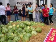 Thị trường - Tiêu dùng - Sau 'giải cứu' nông sản: Cần giải pháp tận gốc