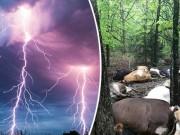 Phi thường - kỳ quặc - Người ngoài hành tinh tàn sát hàng loạt 32 con bò?
