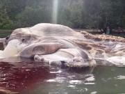 Thế giới - Xác quái vật khổng lồ gây hoang mang ở Indonesia