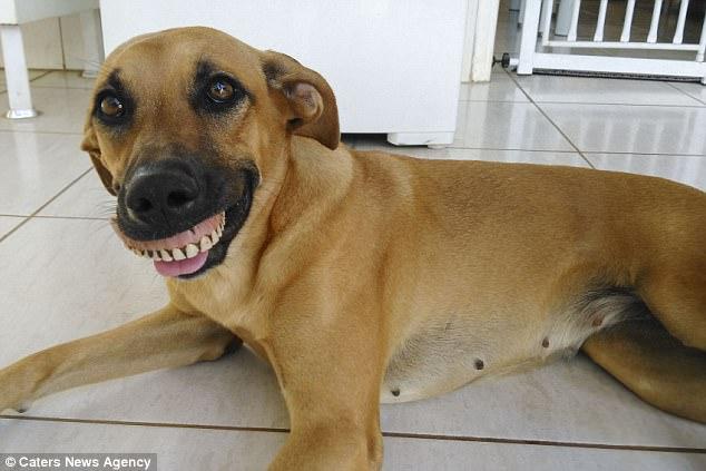 Chú chó nổi tiếng vì có hàm...răng người - 3