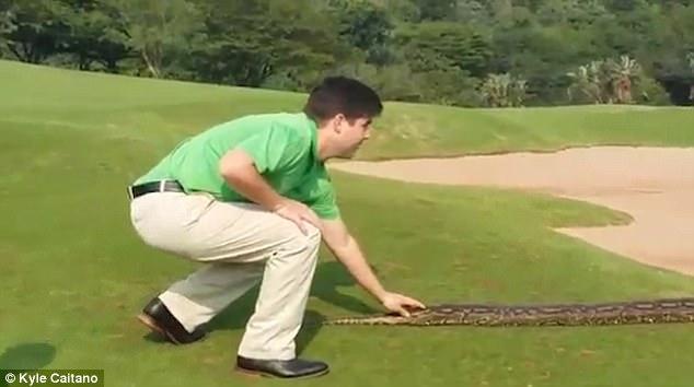 """Video: Trăn """"khủng"""" dài 4 mét đại náo sân golf ở Nam Phi - 2"""