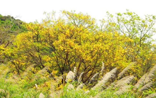 Sơn Trà đẹp ngỡ ngàng trong khoảnh khắc giao mùa - 5