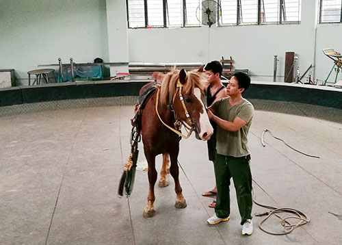 Sự thật tàn khốc ít người biết về những tiết mục xiếc ngựa - 3