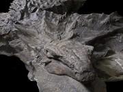 Hóa thạch khủng long nguyên vẹn hơn 100 triệu năm