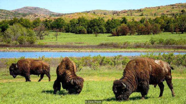 Dãy núi lạ lùng xuất hiện giữa thảo nguyên xanh tốt ở Mỹ - 8