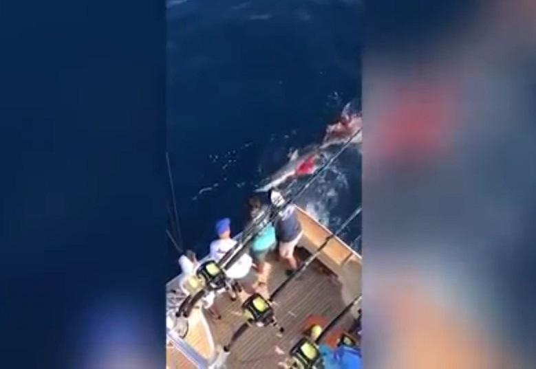 Phẫn nộ cảnh dùng súng bắn cá mập hổ đến chết ở Mexico - 1