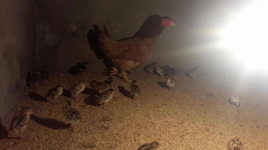 Muốn giàu thì nuôi chim...rừng - 1