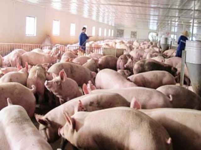 TP.HCM vận động nhà giáo tăng cường dùng thịt heo - 1