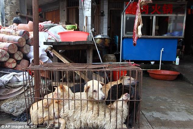 Cấm bán thịt chó trong lễ hội khét tiếng nhất Trung Quốc - 1