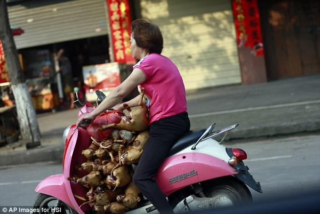 Cấm bán thịt chó trong lễ hội khét tiếng nhất Trung Quốc - 3