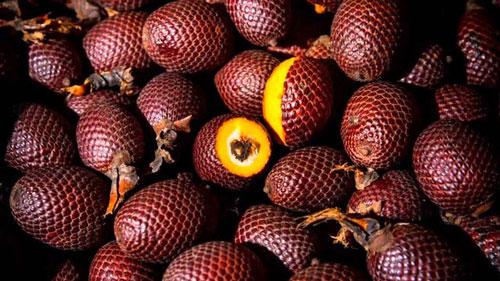 Những lợi ích không ngờ này khiến nhà giàu đua nhau mua trái cây ngoại lai - 8