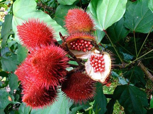 Những lợi ích không ngờ này khiến nhà giàu đua nhau mua trái cây ngoại lai - 7
