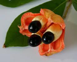 Những lợi ích không ngờ này khiến nhà giàu đua nhau mua trái cây ngoại lai - 4