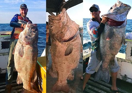 """Úc: Đi câu cá 3kg, bắt được """"quái vật"""" khổng lồ 70kg - 2"""
