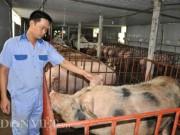 Thị trường - Tiêu dùng - SỐC: Mất 10.000 tỷ đồng từ cuộc đại khủng hoảng lợn